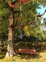 tree swing for relaxing and enjoying nature